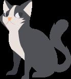 animo-perdu ou trouvé un chat